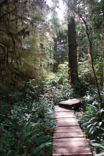 BC Rain Forest - 2012