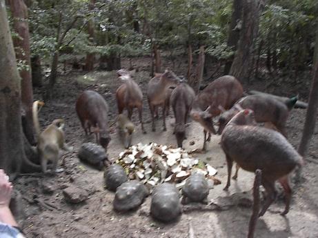 Animal Preserve, Barbados, 2004-KP