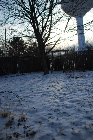 Backyard in Winter