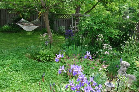 Backyard in Spring