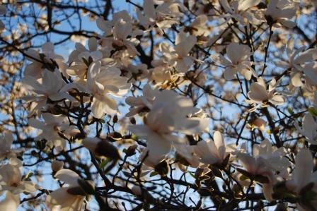 Spring Trees, KP-May 2013