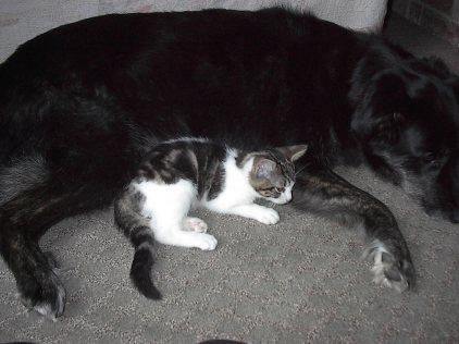 Sam & Cocoa, 2003