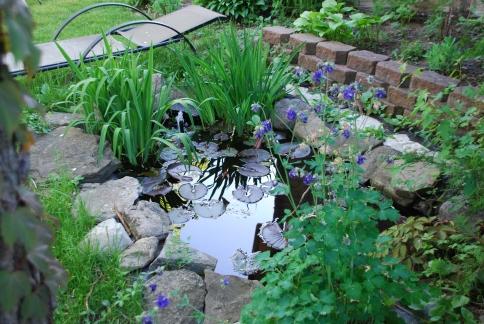 Water Garden, Mid-Spring