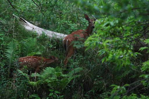Two Deer 2, Dundas, Ontario