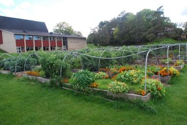 Community Garden in Dundas, Ontario