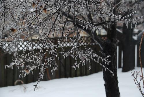 Trees in Ice Dec 2013