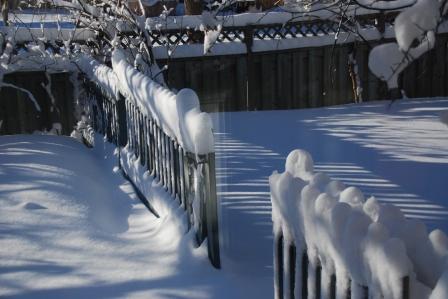 Backyard Fence-March 13, 2014-KP