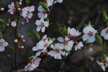 Flowers, Creek Trail, May 2014-KP