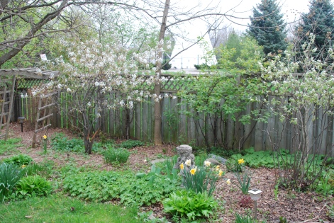 Back yard in early spring - May 2014-KP