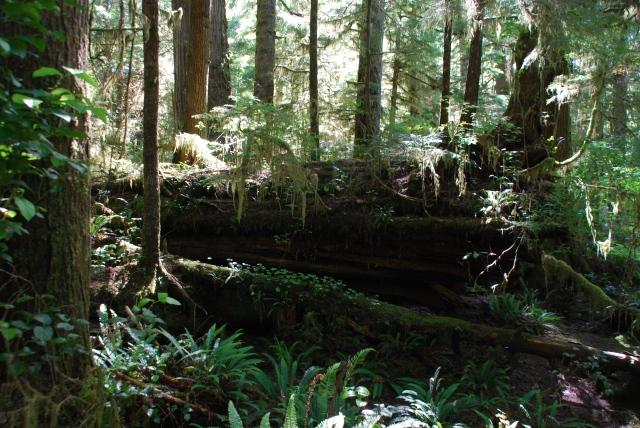 Rain Forest, Pacific Rim, Vancouver Island, Canada.  KP